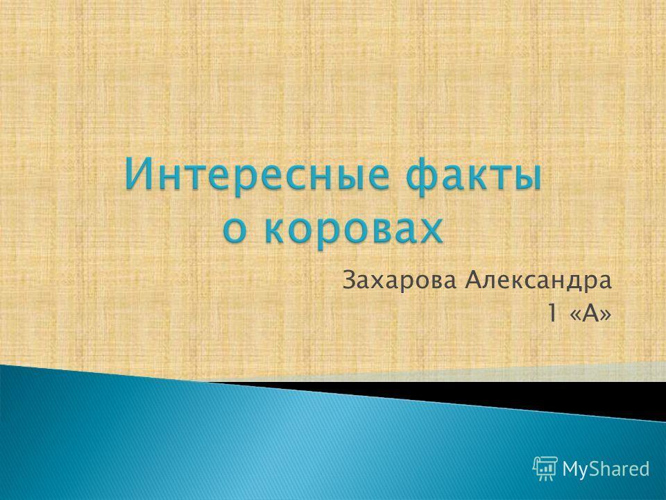 Захарова Александра 1 «А»