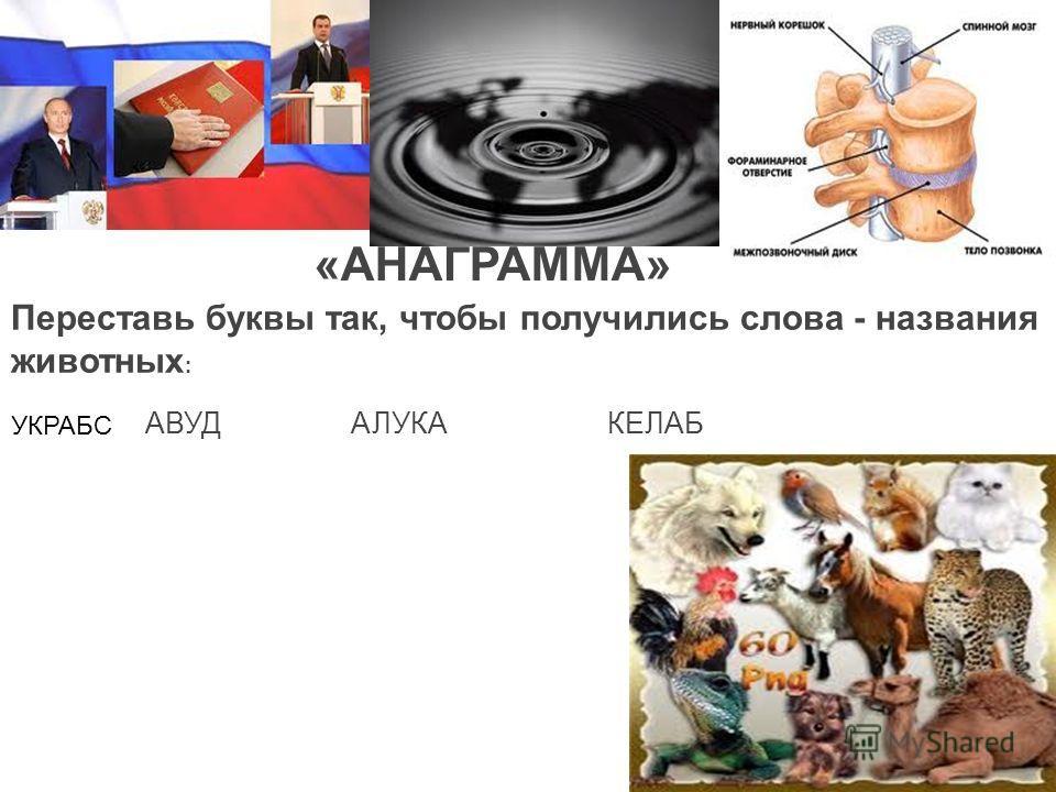 «АНАГРАММА» Переставь буквы так, чтобы получились слова - названия животных : УКРАБС АВУД АЛУКА КЕЛАБ