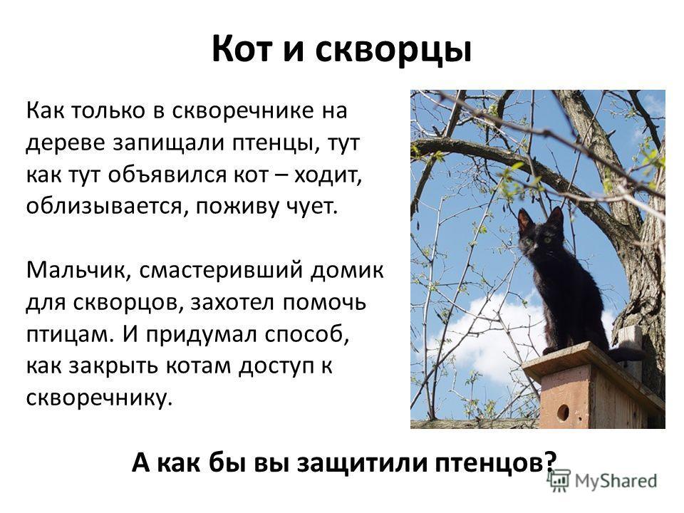 А как бы вы защитили птенцов? Кот и скворцы Как только в скворечнике на дереве запищали птенцы, тут как тут объявился кот – ходит, облизывается, поживу чует. Мальчик, смастеривший домик для скворцов, захотел помочь птицам. И придумал способ, как закр