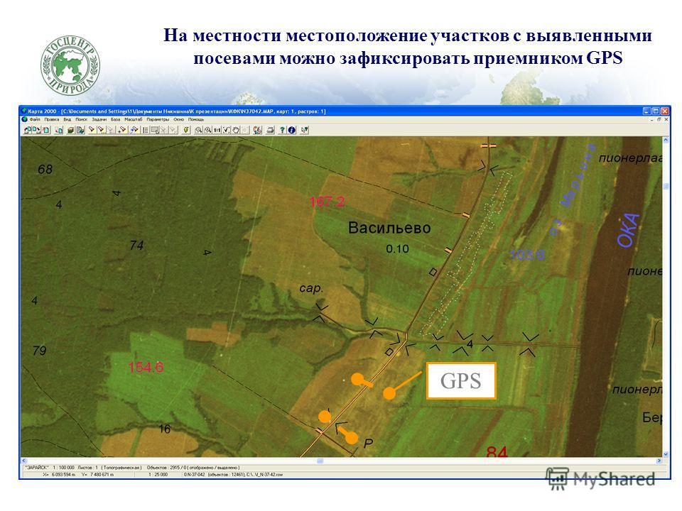 На местности местоположение участков с выявленными посевами можно зафиксировать приемником GPS GPS