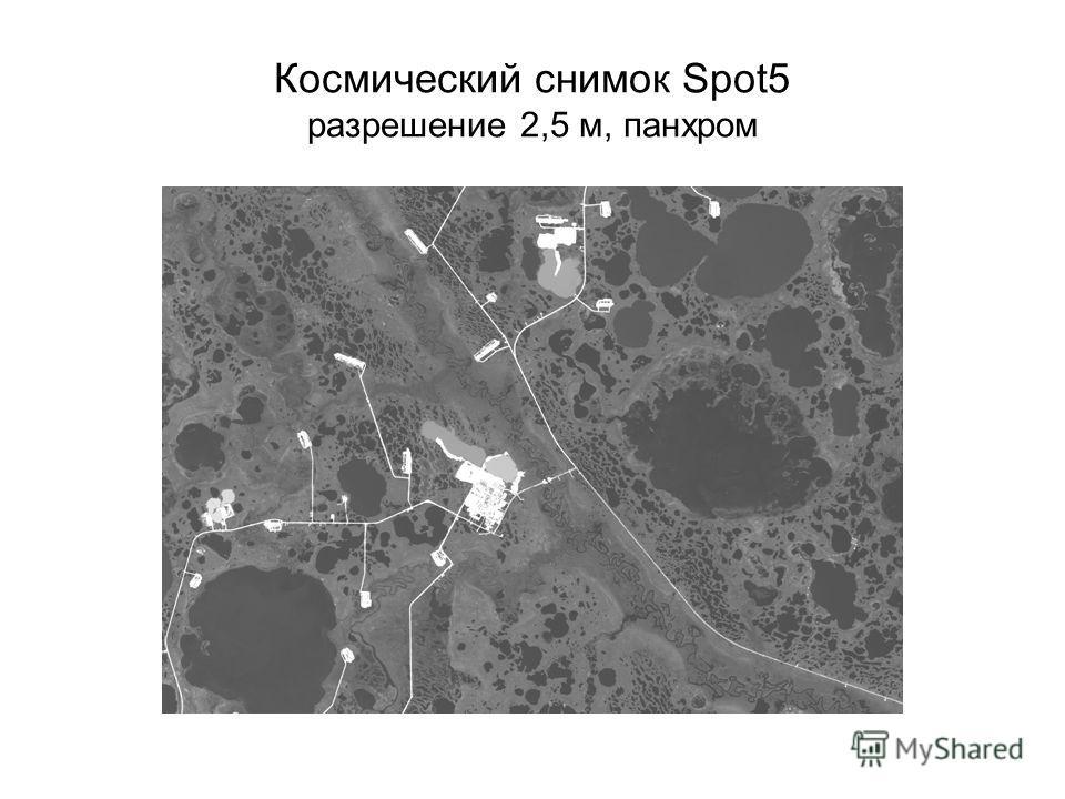 Космический снимок Spot5 разрешение 2,5 м, панхром