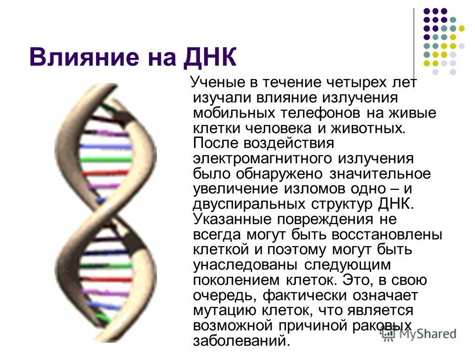 Влияние на ДНК Ученые в течение четырех лет изучали влияние излучения мобильных телефонов на живые клетки человека и животных. После воздействия электромагнитного излучения было обнаружено значительное увеличение изломов одно – и двуспиральных структ