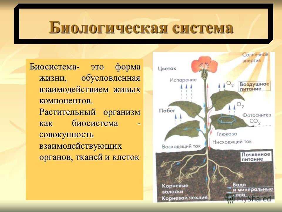 Биологическая система Биосистема- это форма жизни, обусловленная взаимодействием живых компонентов. Растительный организм как биосистема - совокупность взаимодействующих органов, тканей и клеток Биосистема- это форма жизни, обусловленная взаимодейств