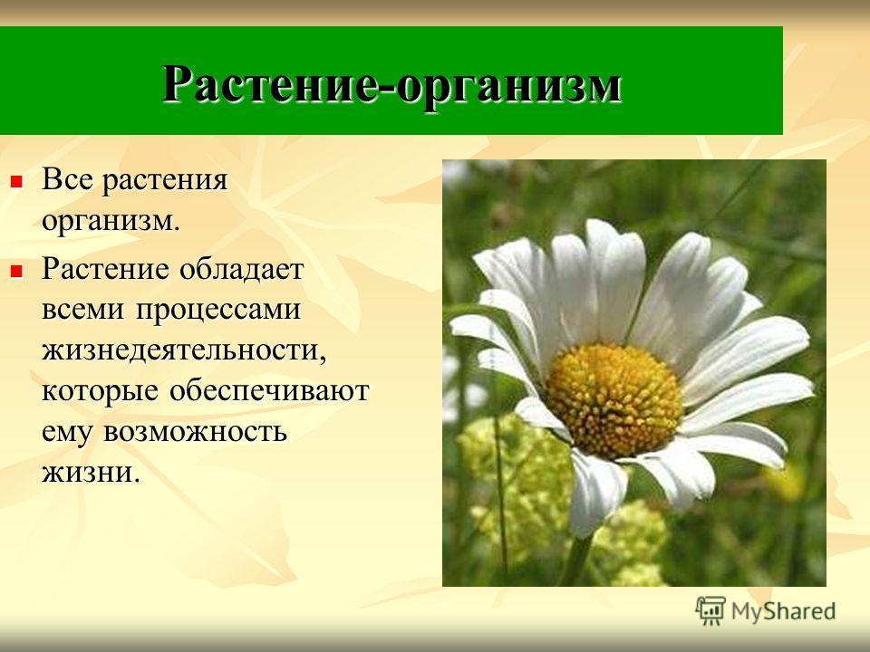 Растение-организм Все растения организм. Все растения организм. Растение обладает всеми процессами жизнедеятельности, которые обеспечивают ему возможность жизни. Растение обладает всеми процессами жизнедеятельности, которые обеспечивают ему возможнос
