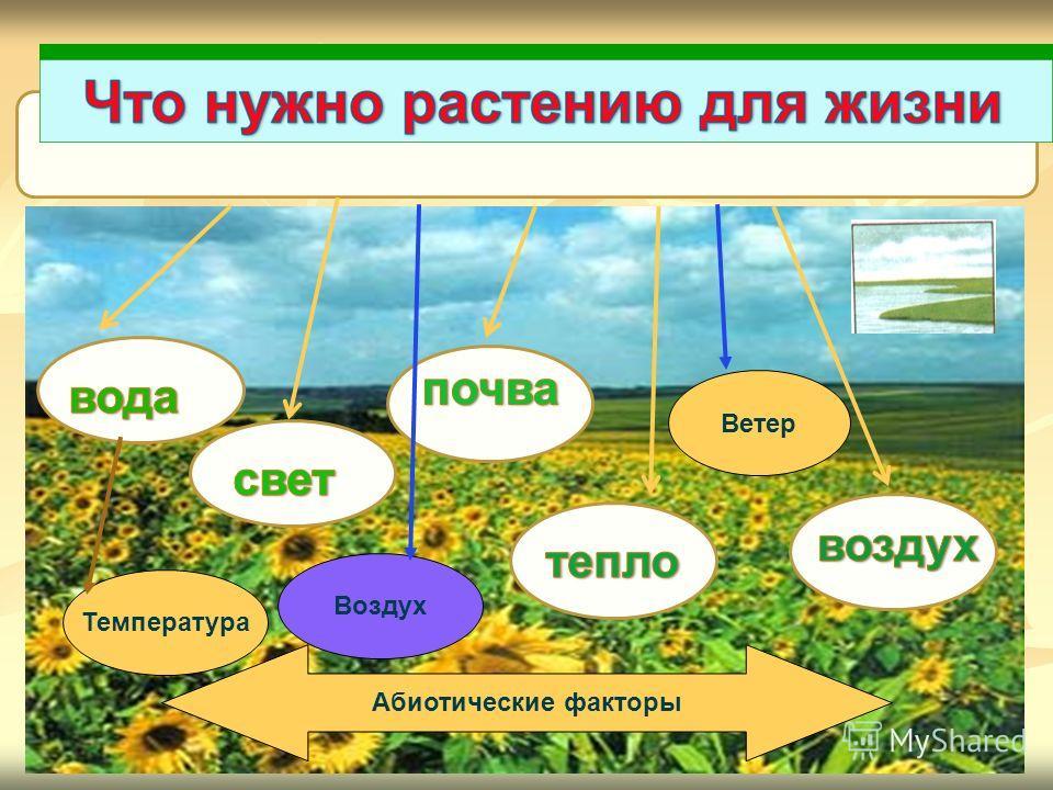 Температура Воздух Ветер Абиотические факторы