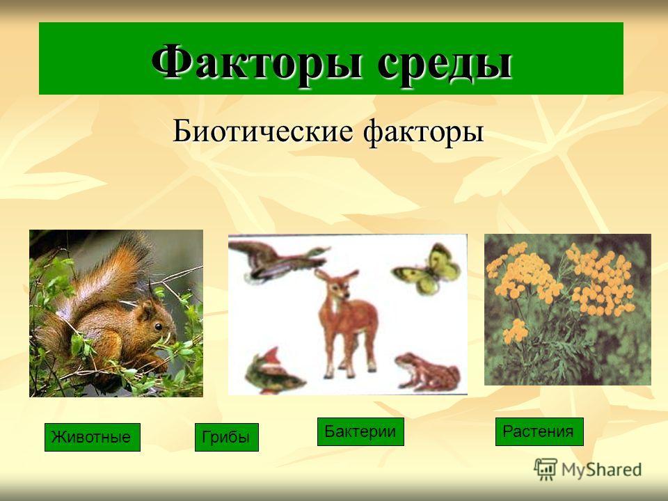 Факторы среды Биотические факторы Животные Растения Грибы Бактерии