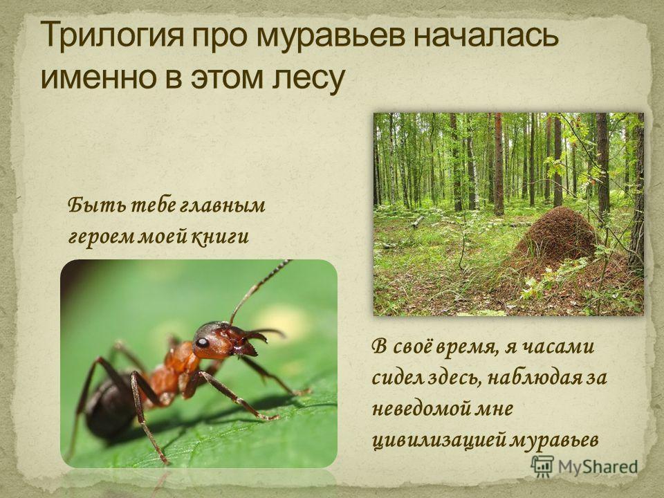 Быть тебе главным героем моей книги В своё время, я часами сидел здесь, наблюдая за неведомой мне цивилизацией муравьев