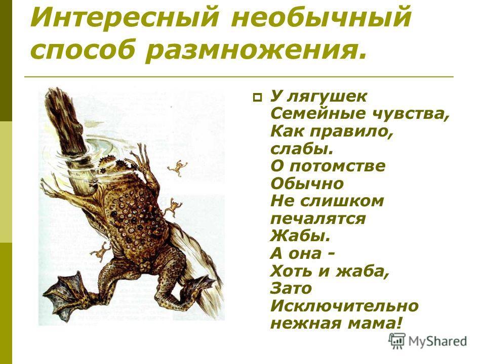 Интересный необычный способ размножения. У лягушек Семейные чувства, Как правило, слабы. О потомстве Обычно Не слишком печалятся Жабы. А она - Хоть и жаба, Зато Исключительно нежная мама!