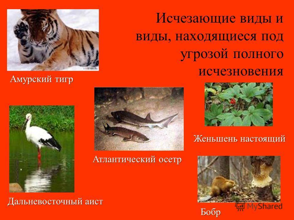 Красная книга Редкие и находящиеся под угрозой исчезновения виды животных и растений