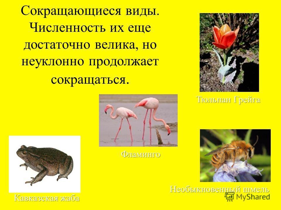 Исчезающие виды и виды, находящиеся под угрозой полного исчезновения Амурский тигр Атлантический осетр Дальневосточный аист Женьшень настоящий Бобр
