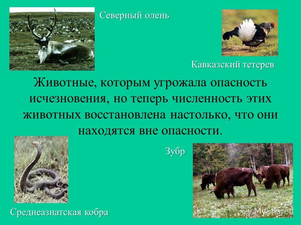 Неопределенные виды – малоизученные и тоже, как правило, редко встречающиеся животные. Даурский ёж Белобокий дельфин Парусник феб Палочник карликовый
