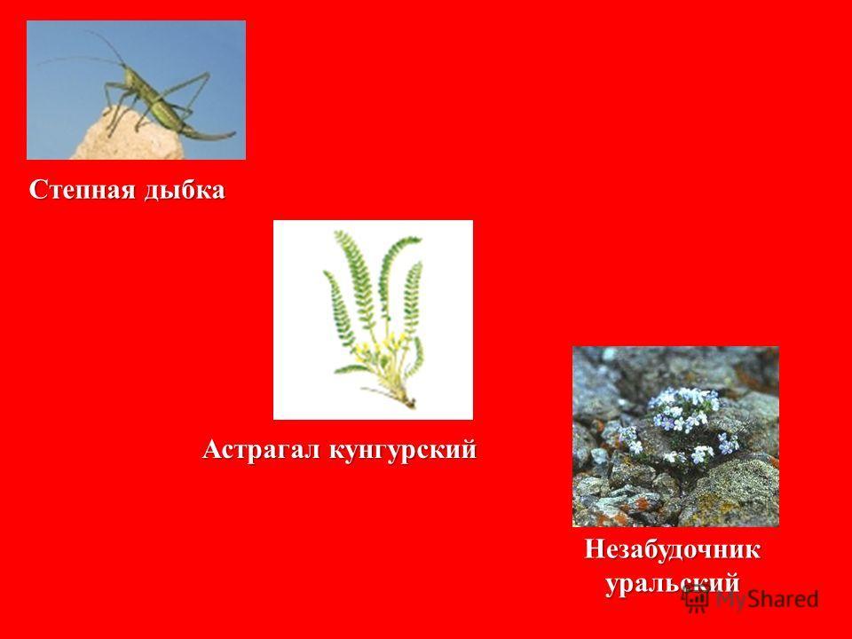 Красная книга Среднего Урала 1996 год 78 видов животных 168 видов растений