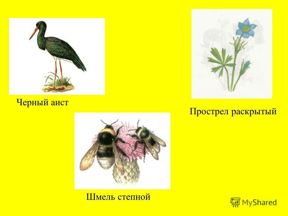 Степная дыбка Незабудочник уральский Астрагал кунгурский