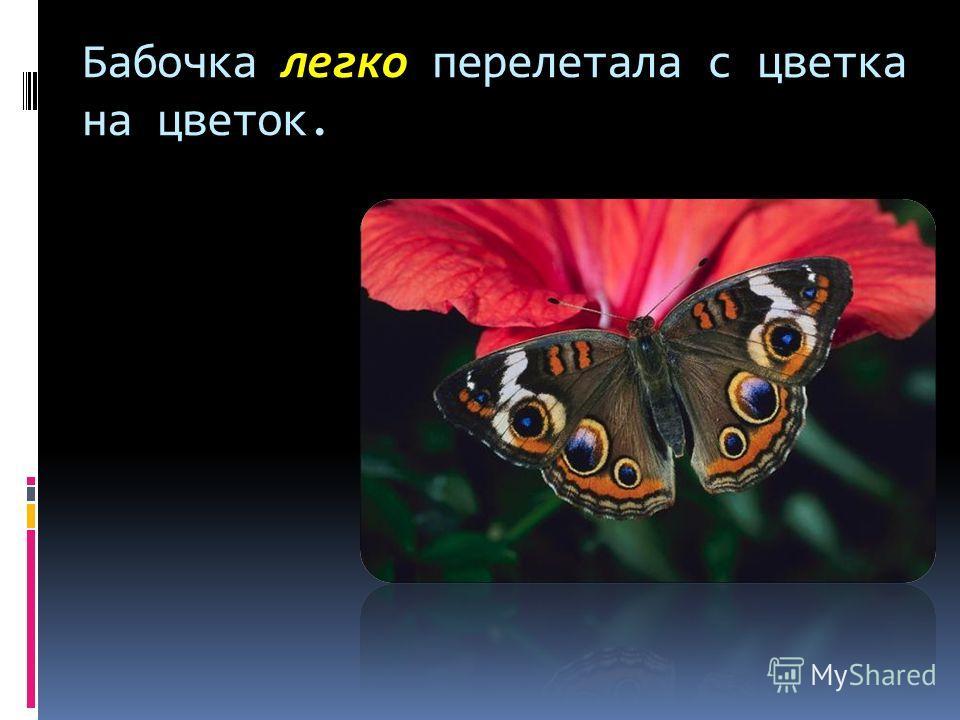 Бабочка легко перелетала с цветка на цветок.