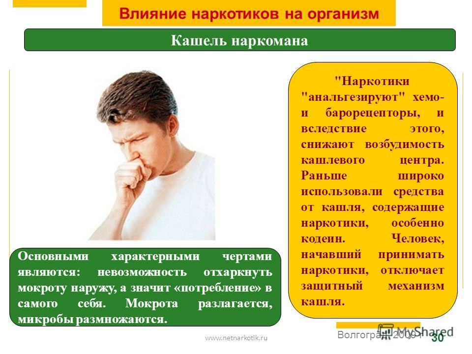 www.netnarkotik.ru 30 Волгоград, 2009 г Влияние наркотиков на организм Кашель наркомана Основными характерными чертами являются: невозможность отхаркнуть мокроту наружу, а значит «потребление» в самого себя. Мокрота разлагается, микробы размножаются.