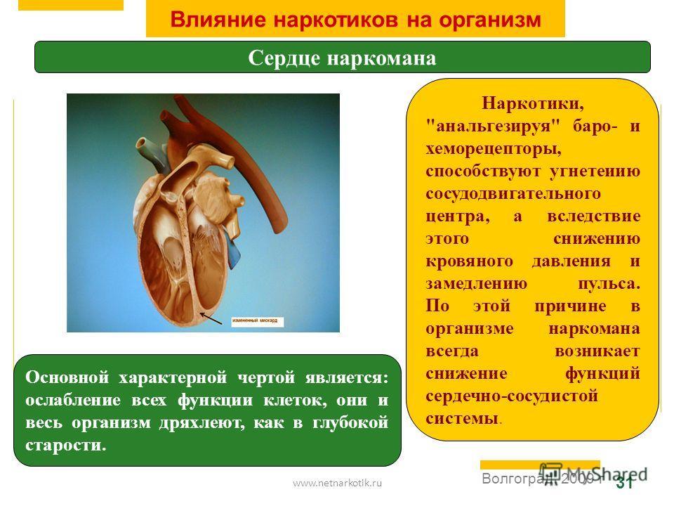 www.netnarkotik.ru 31 Волгоград, 2009 г Влияние наркотиков на организм Сердце наркомана Основной характерной чертой является: ослабление всех функции клеток, они и весь организм дряхлеют, как в глубокой старости. Наркотики,