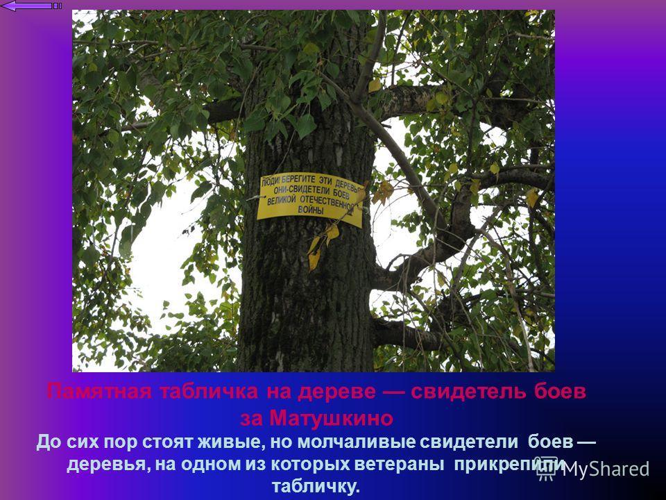 Памятная табличка на дереве свидетель боев за Матушкино До сих пор стоят живые, но молчаливые свидетели боев деревья, на одном из которых ветераны прикрепили табличку.