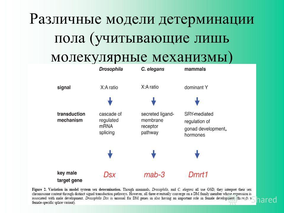 Различные модели детерминации пола (учитывающие лишь молекулярные механизмы)