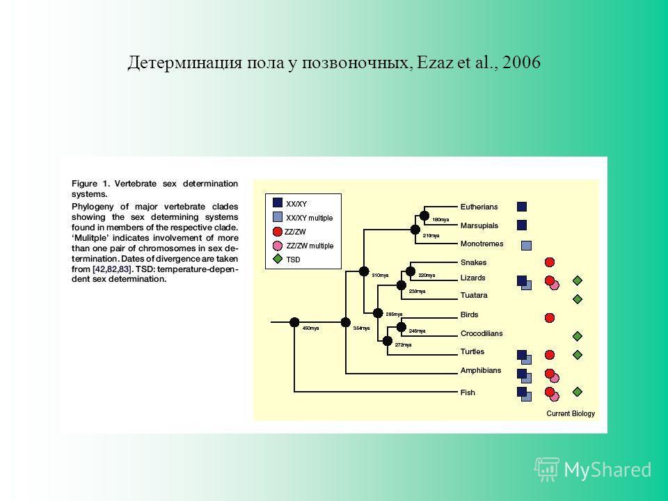 Детерминация пола у позвоночных, Ezaz et al., 2006