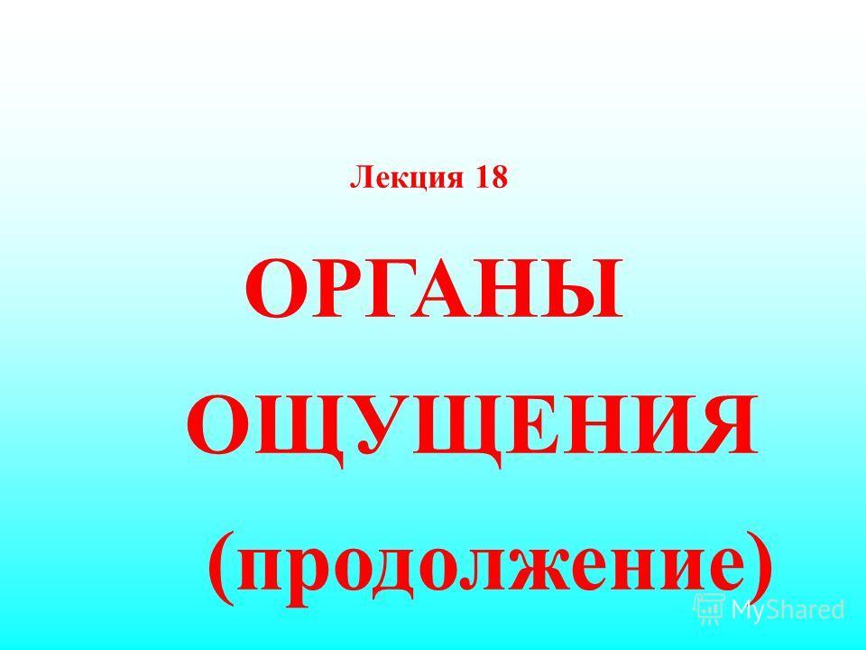 Лекция 18 ОРГАНЫ ОЩУЩЕНИЯ (продолжение)