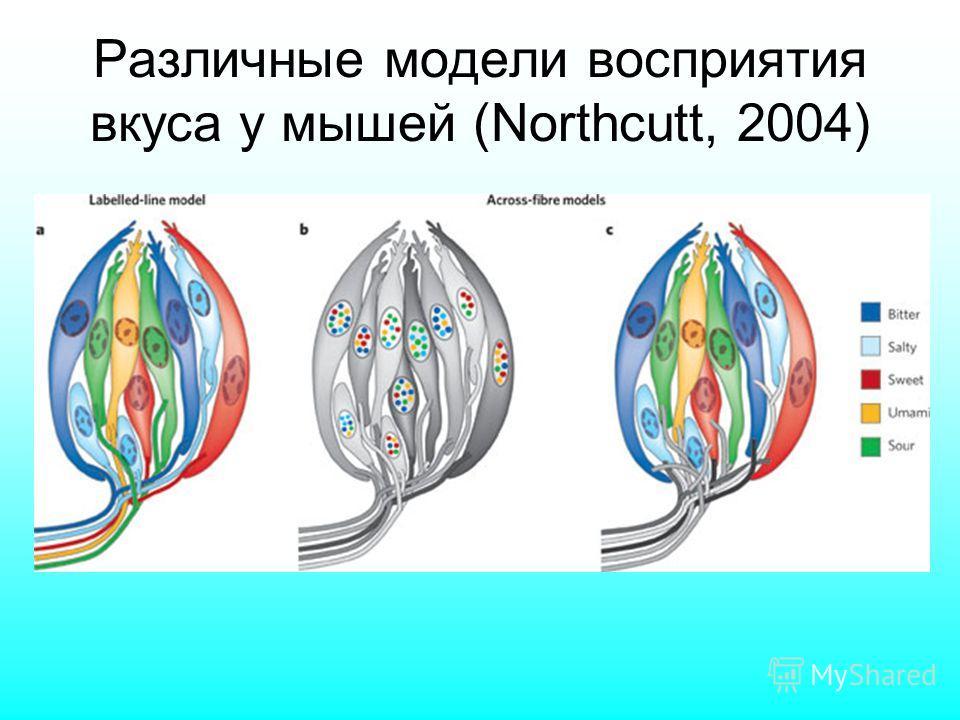 Различные модели восприятия вкуса у мышей (Northcutt, 2004)