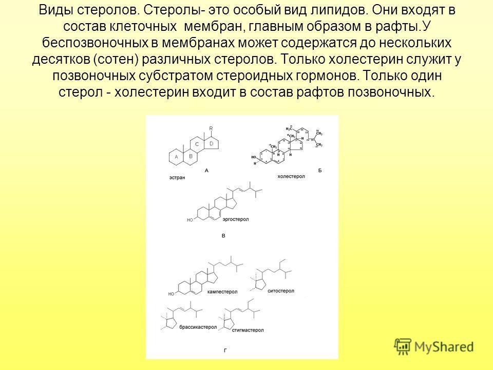 Виды стеролов. Стеролы- это особый вид липидов. Они входят в состав клеточных мембран, главным образом в рафты.У беспозвоночных в мембранах может содержатся до нескольких десятков (сотен) различных стеролов. Только холестерин служит у позвоночных суб
