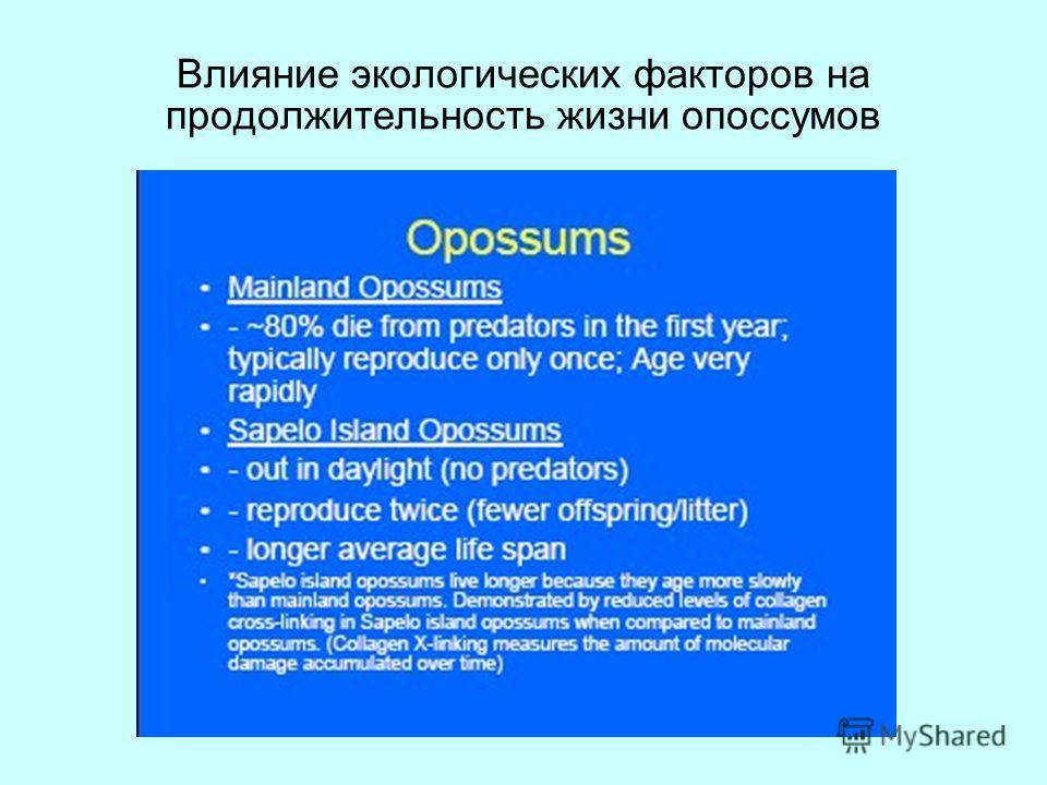 Влияние экологических факторов на продолжительность жизни опоссумов