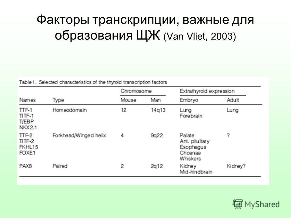 Факторы транскрипции, важные для образования ЩЖ (Van Vliet, 2003)