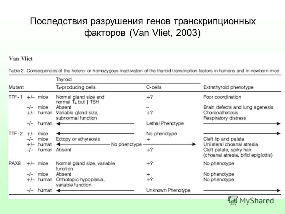 Последствия разрушения генов транскрипционных факторов (Van Vliet, 2003)