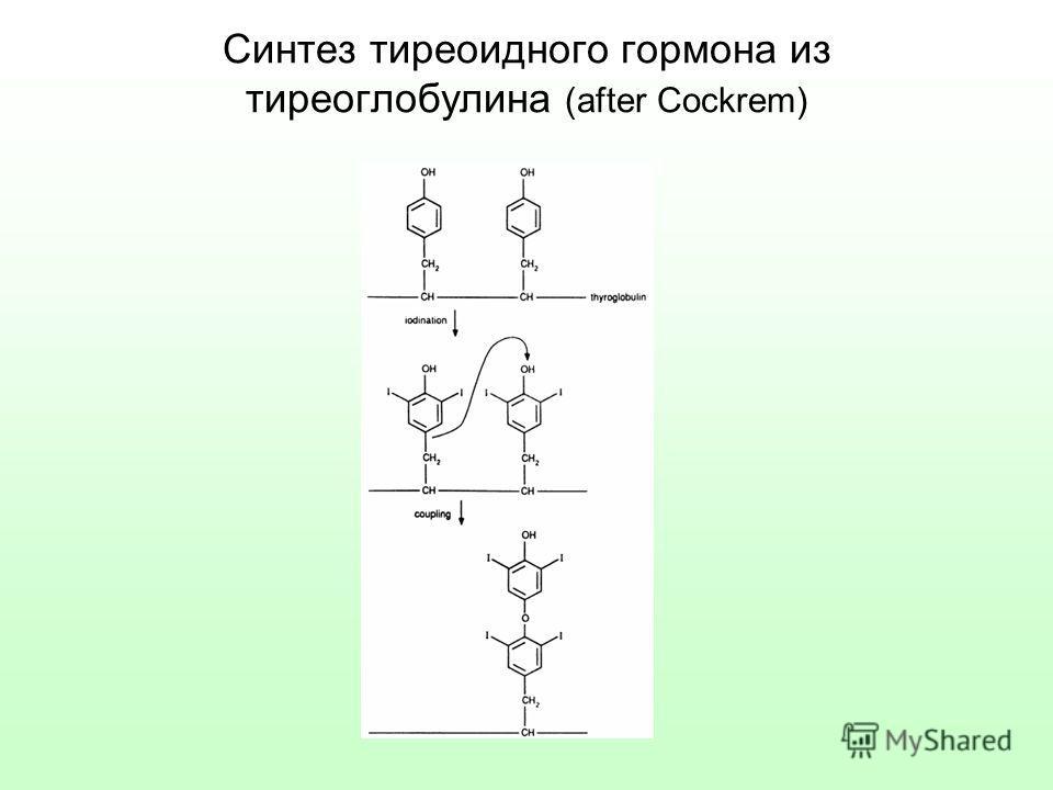 Синтез тиреоидного гормона из тиреоглобулина (after Cockrem)