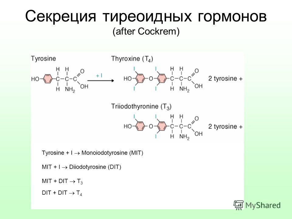 Секреция тиреоидных гормонов (after Cockrem)