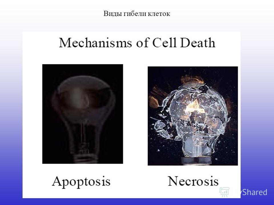 Виды гибели клеток