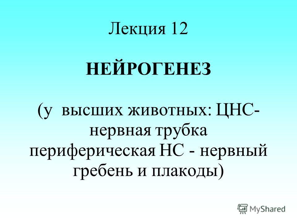 Лекция 12 НЕЙРОГЕНЕЗ (у высших животных: ЦНС- нервная трубка периферическая НС - нервный гребень и плакоды)