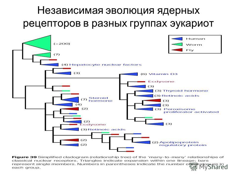 Независимая эволюция ядерных рецепторов в разных группах эукариот