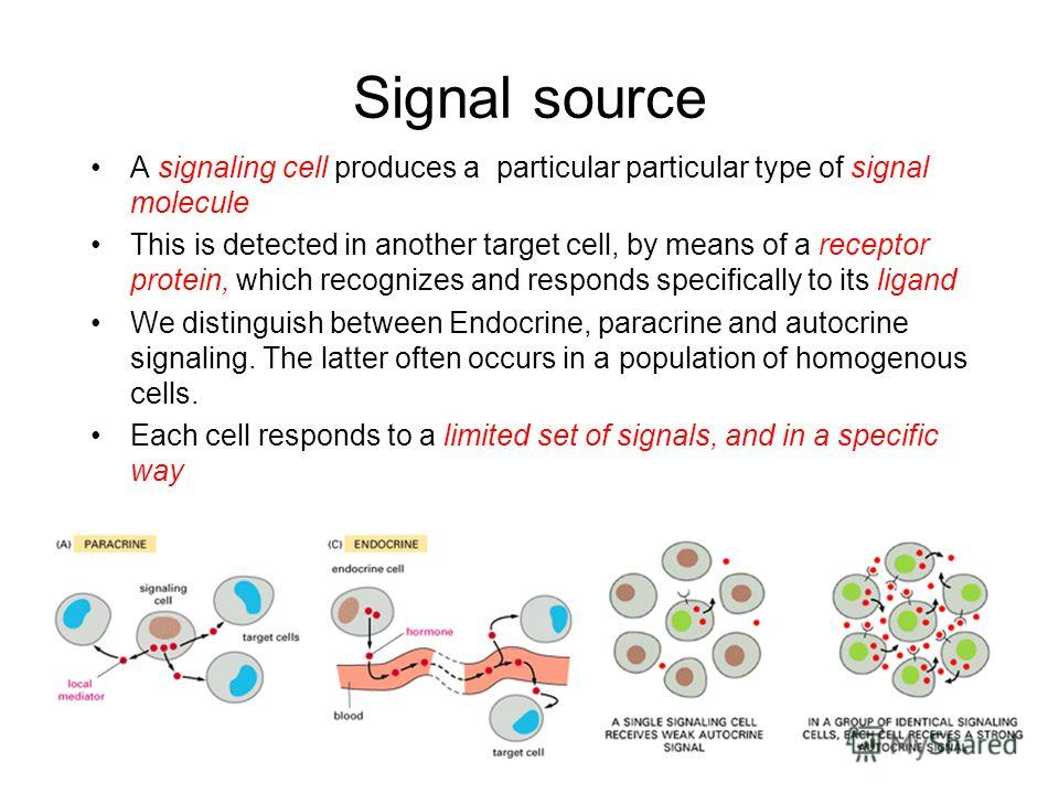 Signal source A signaling cell produces a particular particular type of signal molecule This is detected in another target cell, by means of a receptor protein, which recognizes and responds specifically to its ligand We distinguish between Endocrine