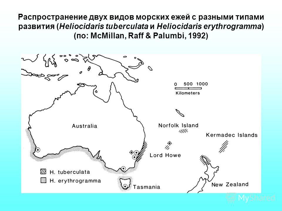 Распространение двух видов морских ежей с разными типами развития (Heliocidaris tuberculata и Heliocidaris erythrogramma) (по: McMillan, Raff & Palumbi, 1992)