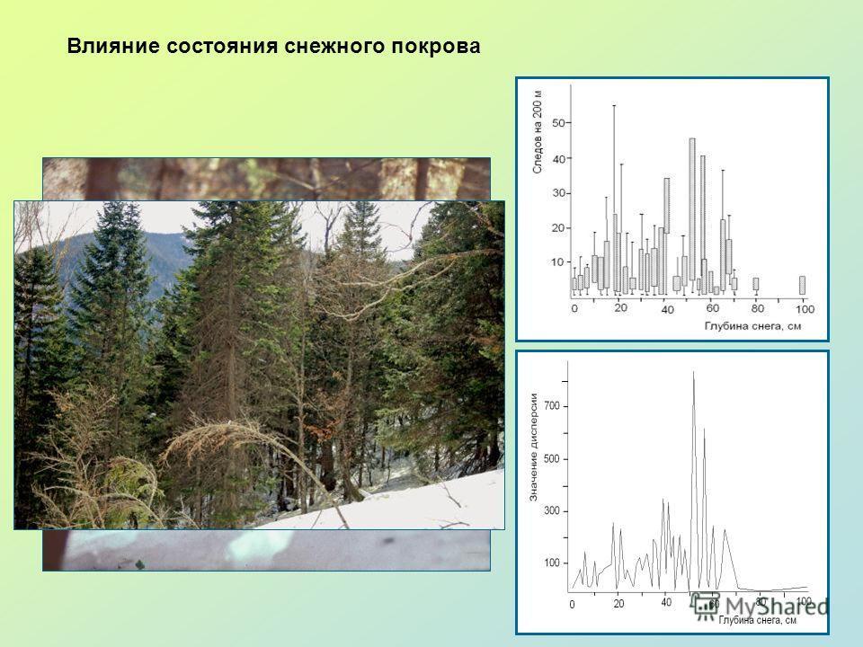 Влияние состояния снежного покрова