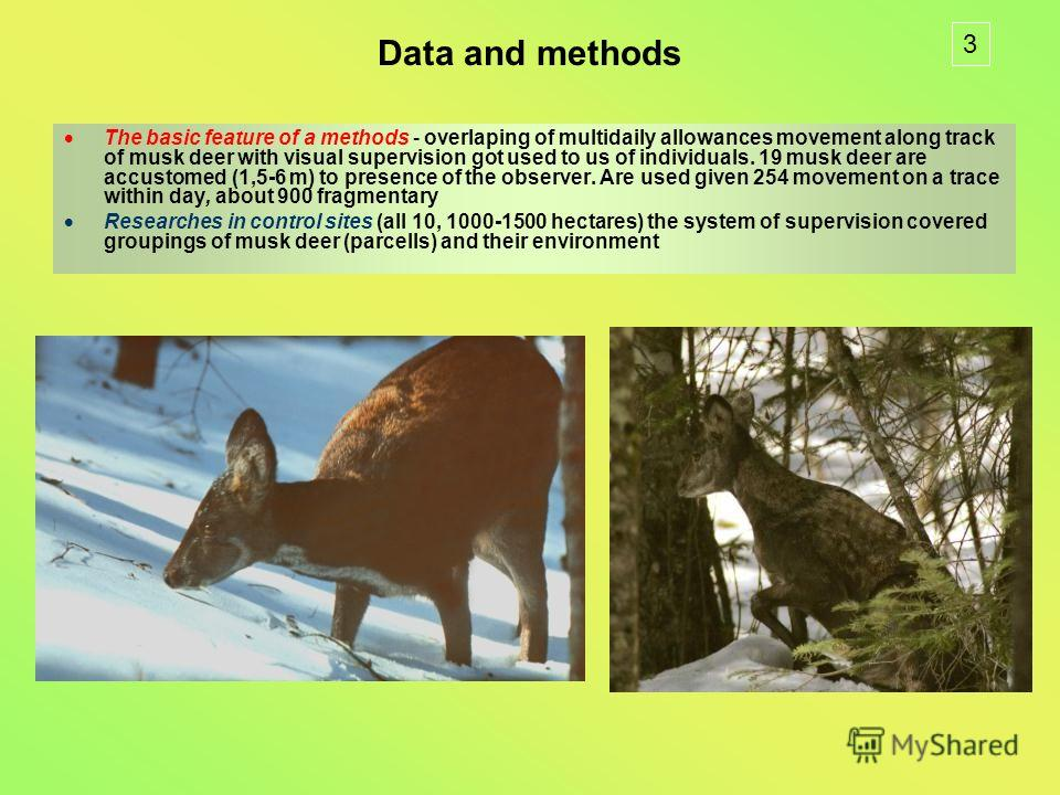 Data and methods The basic feature of a methods - overlaping of multidaily allowances movement along track of musk deer with visual supervision got used to us of individuals. 19 musk deer are accustomed (1,5-6 m) to presence of the observer. Are used