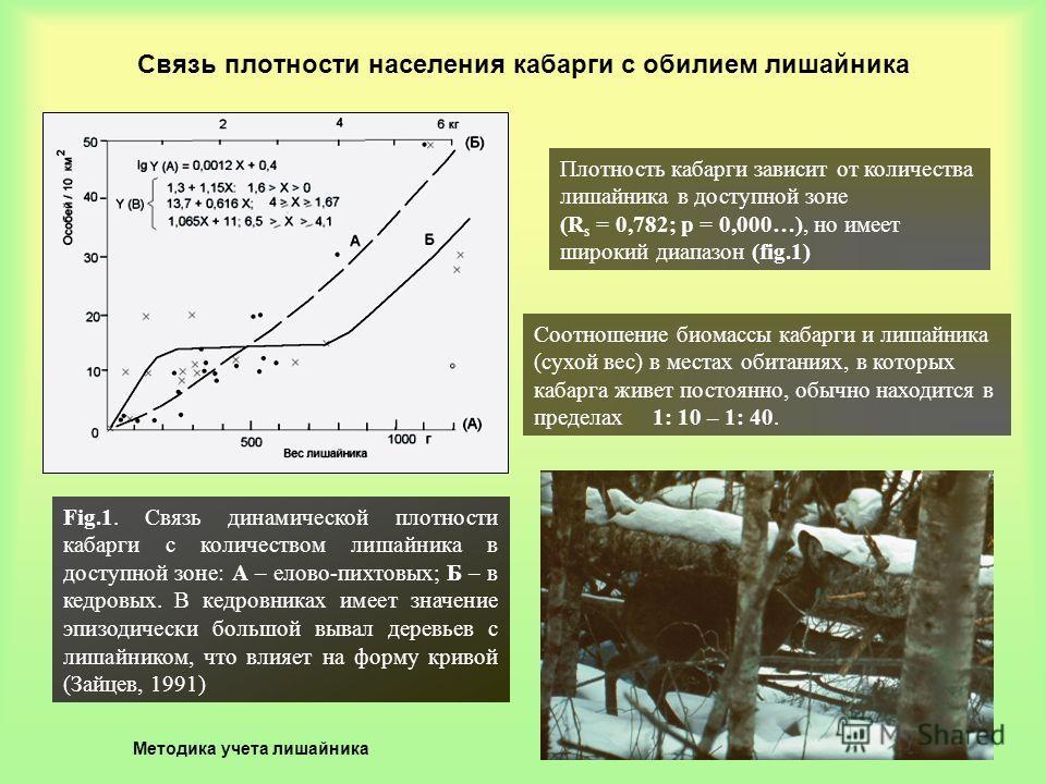 Связь плотности населения кабарги с обилием лишайника Fig.1. Связь динамической плотности кабарги с количеством лишайника в доступной зоне: А – елово-пихтовых; Б – в кедровых. В кедровниках имеет значение эпизодически большой вывал деревьев с лишайни