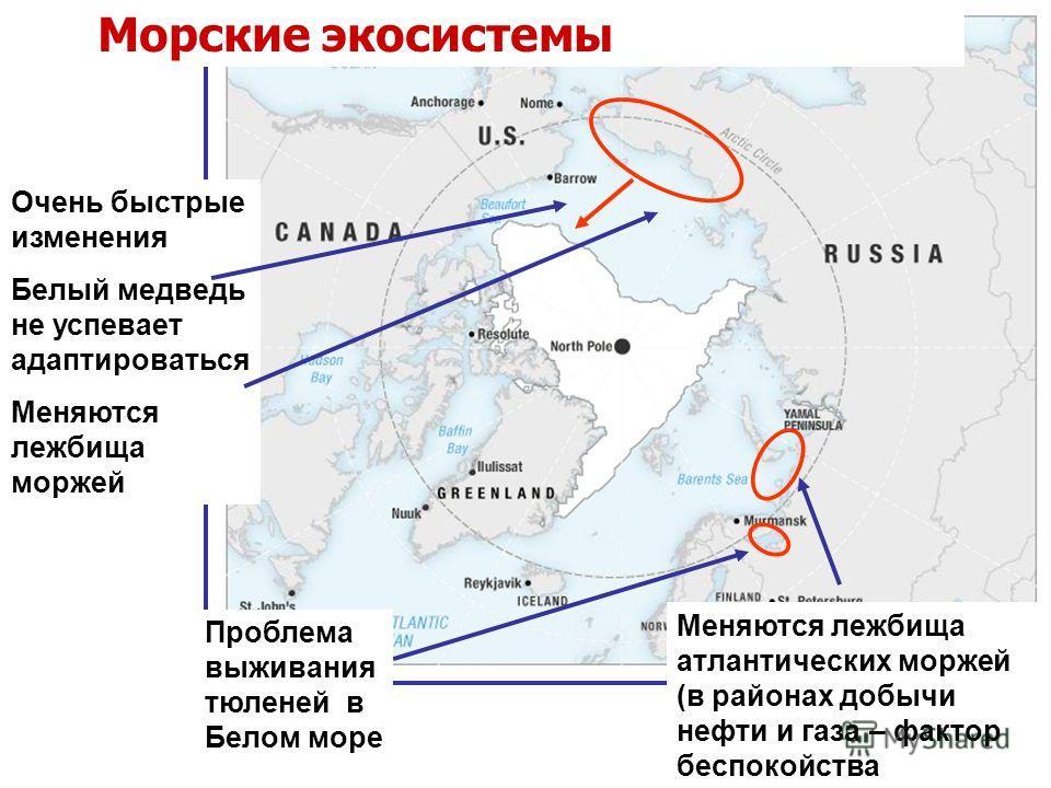 Очень быстрые изменения Белый медведь не успевает адаптироваться Меняются лежбища моржей Морские экосистемы Меняются лежбища атлантических моржей (в районах добычи нефти и газа – фактор беспокойства Проблема выживания тюленей в Белом море