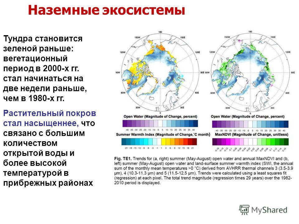 Тундра становится зеленой раньше: вегетационный период в 2000-х гг. стал начинаться на две недели раньше, чем в 1980-х гг. Растительный покров стал насыщеннее, что связано с большим количеством открытой воды и более высокой температурой в прибрежных