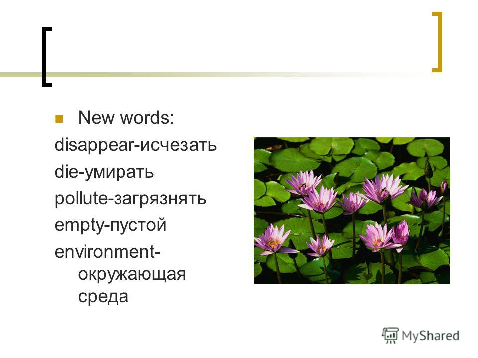 New words: disappear-исчезать die-умирать pollute-загрязнять empty-пустой environment- окружающая среда