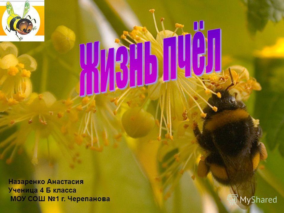 Назаренко Анастасия Ученица 4 Б класса МОУ СОШ 1 г. Черепанова