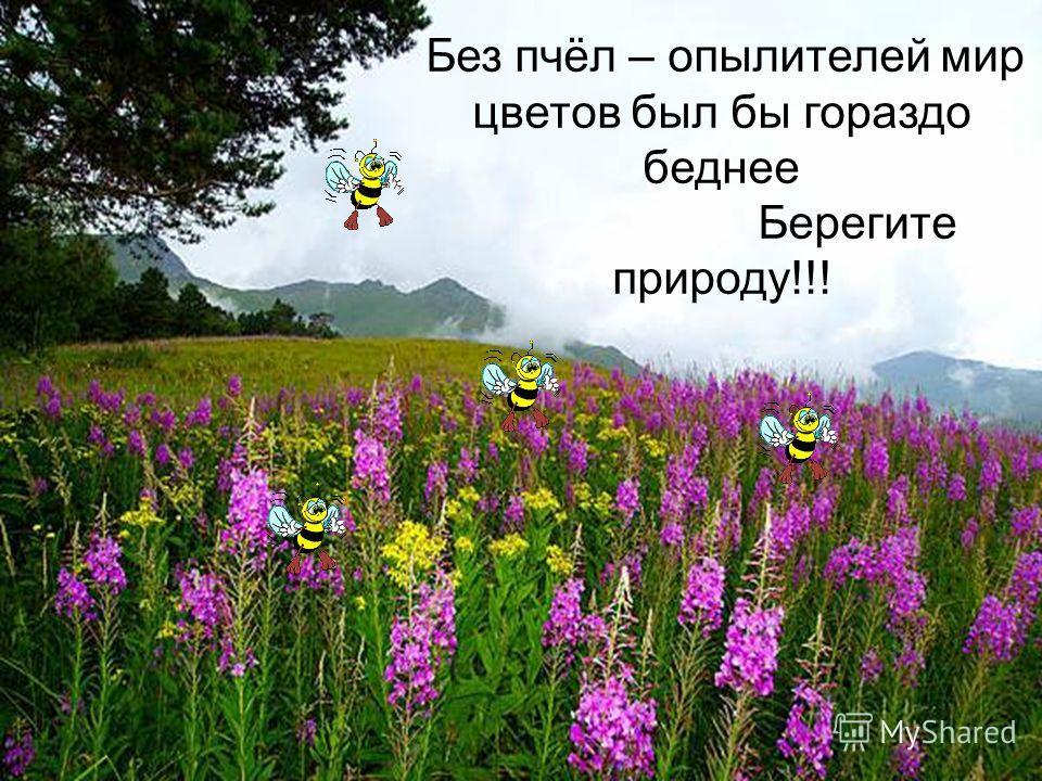 Без пчёл – опылителей мир цветов был бы гораздо беднее Берегите природу!!!