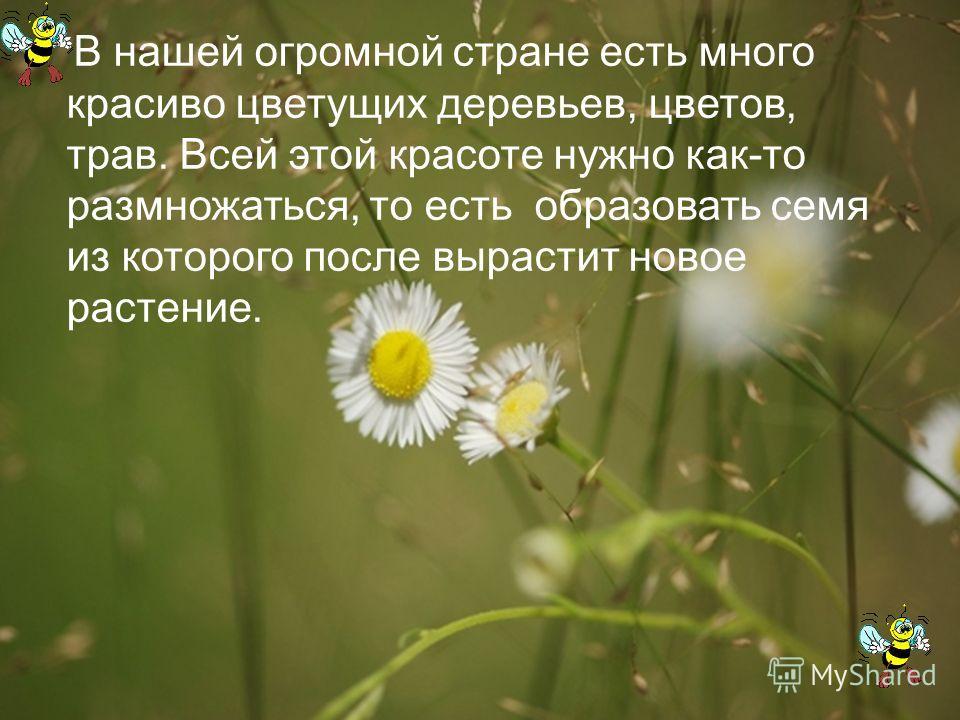 В нашей огромной стране есть много красиво цветущих деревьев, цветов, трав. Всей этой красоте нужно как-то размножаться, то есть образовать семя из которого после вырастит новое растение.