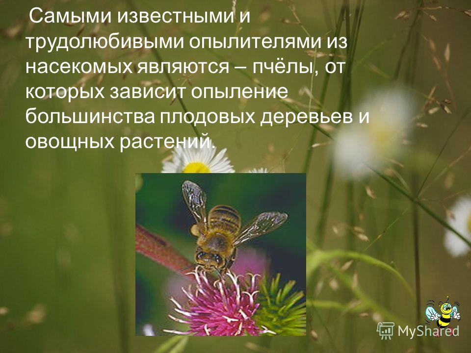 Самыми известными и трудолюбивыми опылителями из насекомых являются – пчёлы, от которых зависит опыление большинства плодовых деревьев и овощных растений.