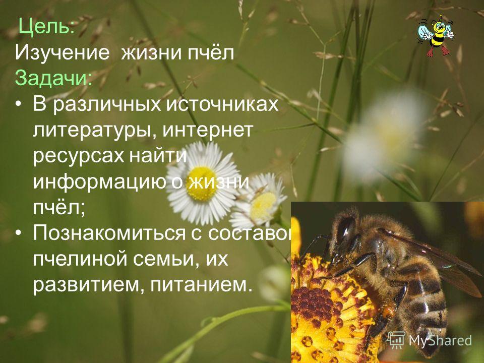 Цель: Изучение жизни пчёл Задачи: В различных источниках литературы, интернет ресурсах найти информацию о жизни пчёл; Познакомиться с составом пчелиной семьи, их развитием, питанием.