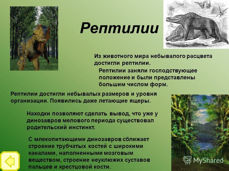 Рептилии Из животного мира небывалого расцвета достигли рептилии. Рептилии заняли господствующее положение и были представлены большим числом форм. Рептилии достигли небывалых размеров и уровня организации. Появились даже летающие ящеры. Находки позв