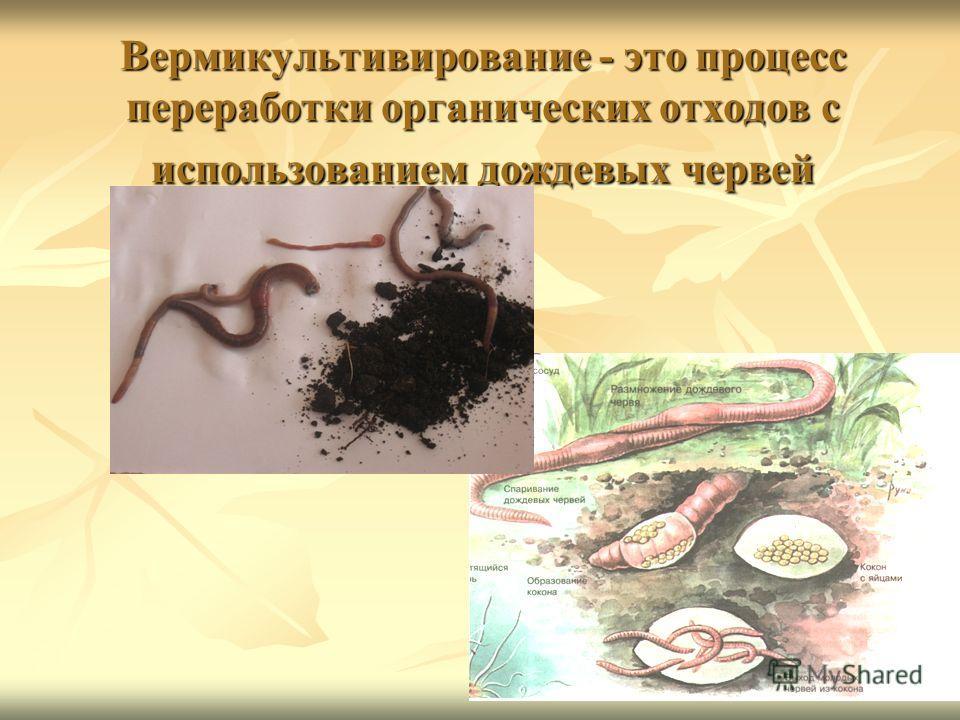 Вермикультивирование - это процесс переработки органических отходов с использованием дождевых червей