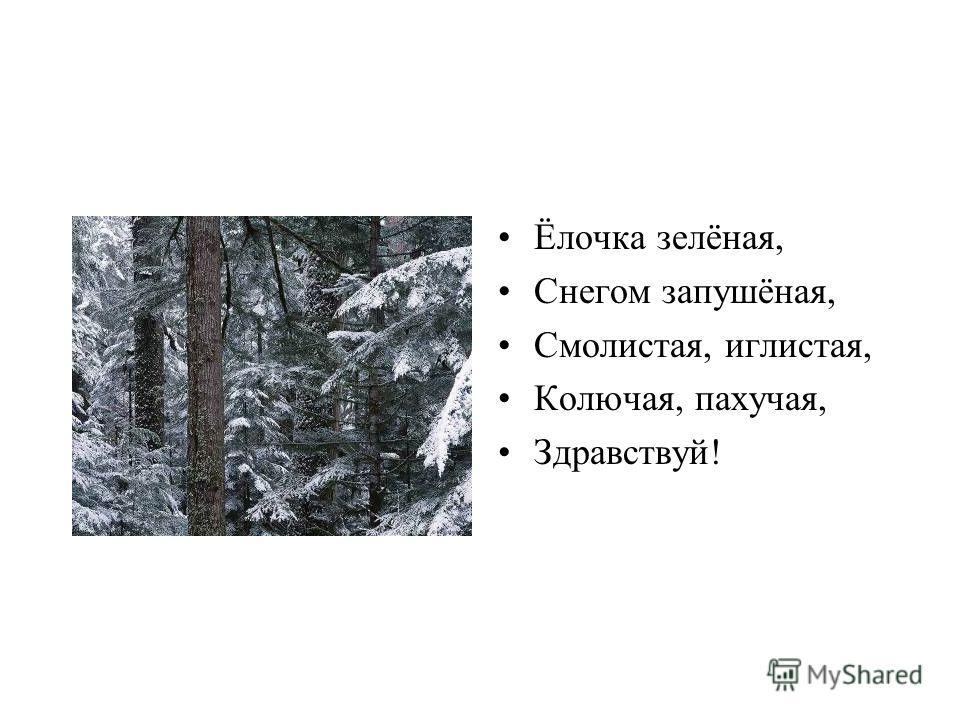 Ёлочка зелёная, Снегом запушёная, Смолистая, иглистая, Колючая, пахучая, Здравствуй!